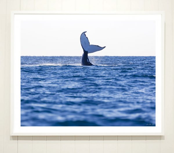 Hello Whale - framed whale photography
