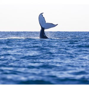 Whale photography by Tracy Naughton