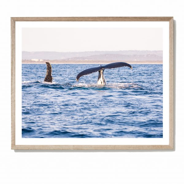 Whale Waterside - Framed