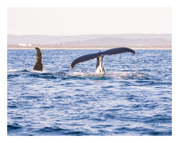 Whale Photography - Waterside